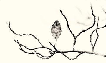 Herbst von Kirsten Warner