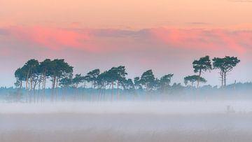 Mooie rij vliegendennen in de mist op de Kalmthoutse Heide van Jos Pannekoek