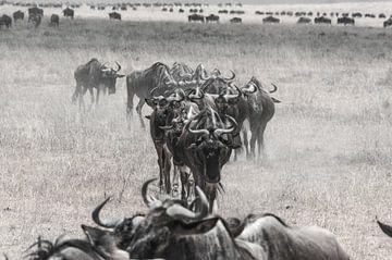 Gnoes in het stof van de  Ngorongoro krater von Karin Mooren