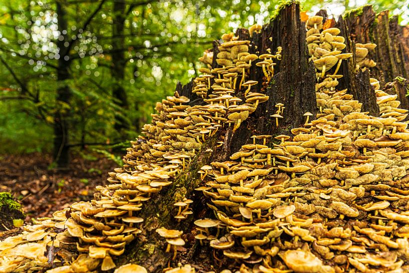 Herfst in het bos van Brian Morgan