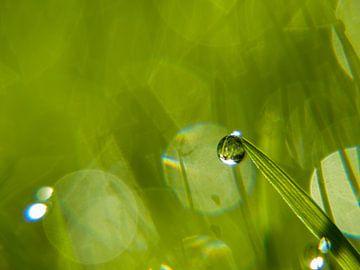 Dauwdruppel in gras van Martijn Wit