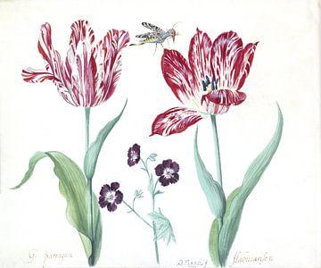 Twee tulpen met ooievaarsbek en insect, Jacob Marrel - 1639
