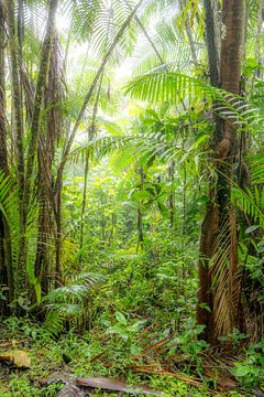 Nebelwald Ecuador #5 von Hanneke Bantje
