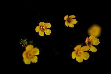 gelb von Peter Heins
