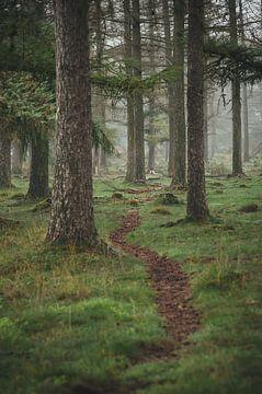 Planken Wambuis bos van Nancy van Verseveld