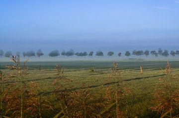 Zwevende bomen von Moetwil en van Dijk - Fotografie
