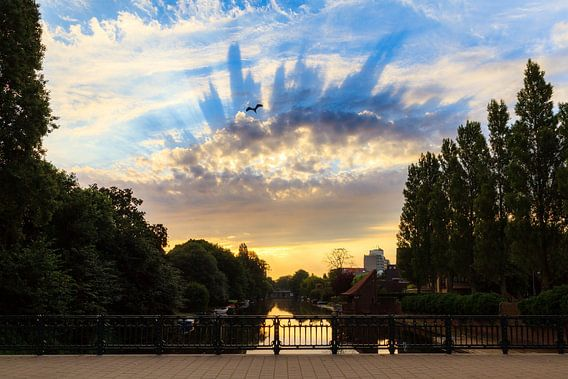 Reiger zonsopkomst Amsterdam