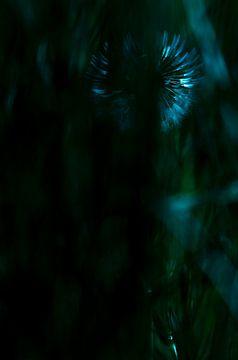 Löwenzahn im Mondlicht von Mindy Molein
