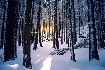 Zonsondergang in winterbos