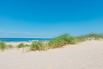 Dünen am Strand mit Strandgras an einem schönen Sommertag am Nordseestrand in Holland. von Sjoerd van der Wal