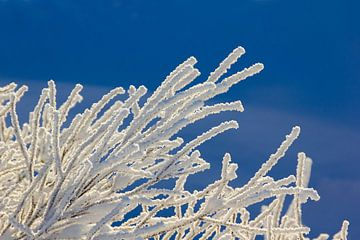 Bevroren takken, Noorwegen van Adelheid Smitt