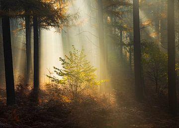 Lichtstralen Veluwe van Rick Kloekke
