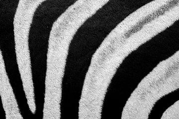 Zebrahaut schwarz-weiß von John Stijnman