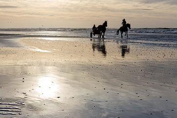 Pferde am Strand bei Sonnenuntergang von eric van der eijk