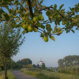 Molen De Vlinder met appelboom van Moetwil en van Dijk - Fotografie