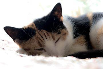 Mein kleines Kätzchen von Annelies Martinot
