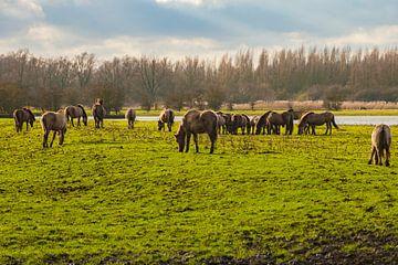 Konikpaarden 2 van Brian Morgan