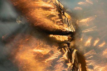 Vurige gloed van Nanda Bussers