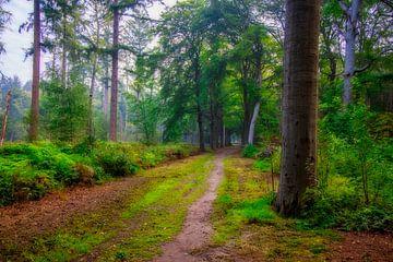 Waldlandschaft von MPhotographer
