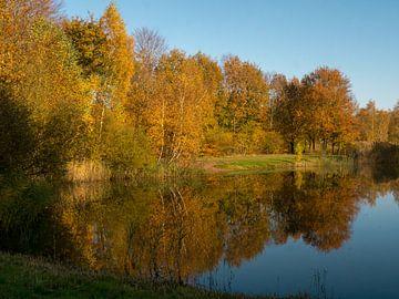 herbstliche Bäume, die sich im Wasser spiegeln von Evelien Brouwer