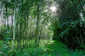 lichtval in een jong bos van Martin Hulsman