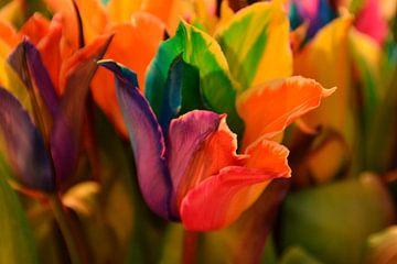 kleurrijke tulp tulipa van tiny brok