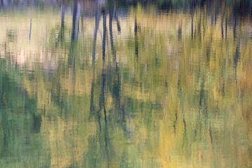 Berkenbomen weerspiegelen in het water van Barbara Brolsma