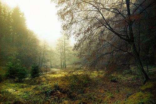 Sprookjes landschap