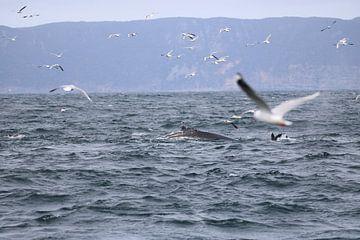 Der Rücken eines Wals kommt hoch, Möwen kommen zur Beobachtung von Lau de Winter