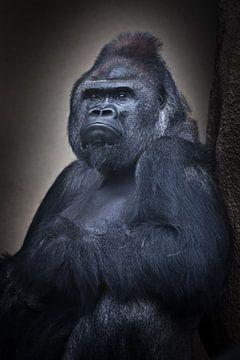 Ruhiges Vertrauen eines sitzenden männlichen Gorillas und seine kräftige Hand, Brustbild von Michael Semenov