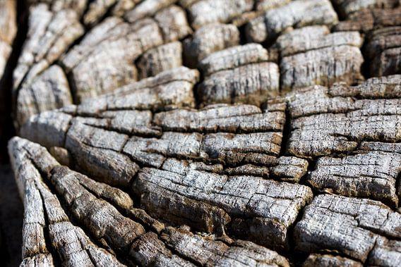 nerven van een boomstam