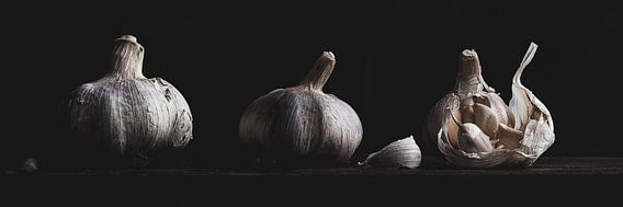 Garlic Panorama