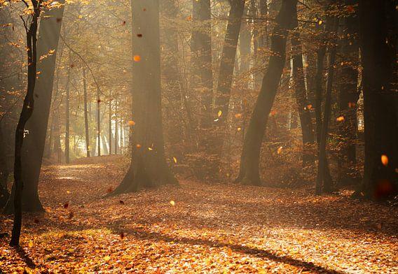 Herbst am frühen Morgen van Kurt Krause