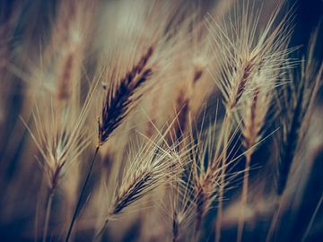 Gräser 5 von Miriam Meijer, en plein campagne.....