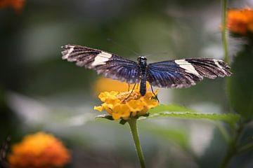Vlinder van Lonneke Prins