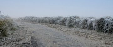 Winter in Zeeland von Ans Janssen