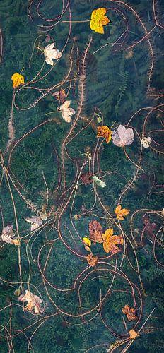 Herfstbladeren op het water