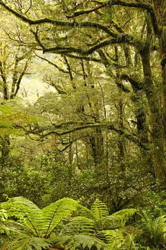 Milford Sound regenwoud / Nieuw - Zeeland van Natalie Bruns
