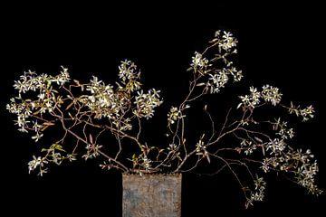fleur du groseillier sur Hanneke Luit