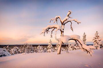 Tief verschneiter Baum von Denis Feiner