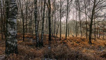 Berkenbomen van Davy Sleijster