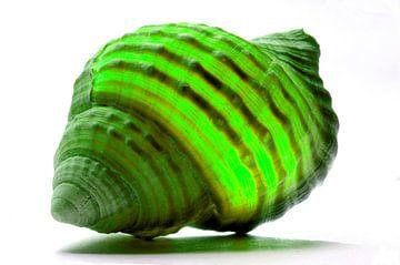 Shell in Green van De Rover