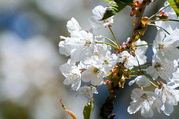 Witte bloemen von Nina Redek