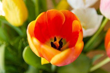 Orange Tulpe - Nahaufnahme von MDRN HOME