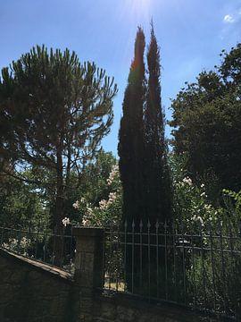 Der geheime Garten van