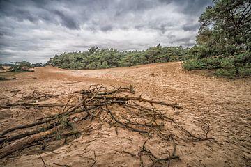 Wekeromse Zand  von Rijk van de Kaa