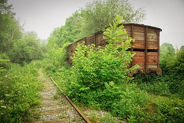 Verlaten treinwagon tussen begroeiing