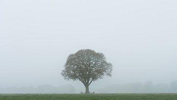 Solitär im Nebel 2 von Stef Kuipers