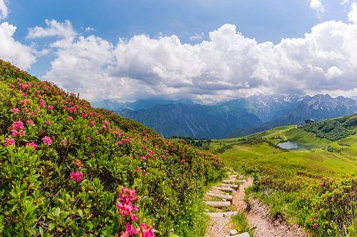 Blooming mountain rose van Walter G. Allgöwer