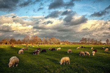 Hollands Landschap. Wolkenlucht en schapen. sur